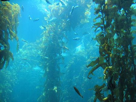 Algas: Belleza Marina