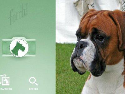 ¿De qué raza es tu perro? Con esta App puedes saberlo