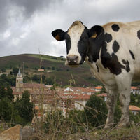 ¿De dónde procede la mitad de todo el metano que emite España?