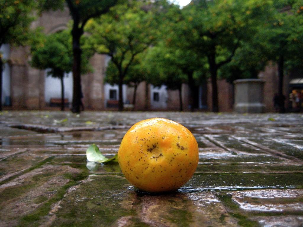 Año negro para la naranja española: los precios (y las frutas) están por el suelo