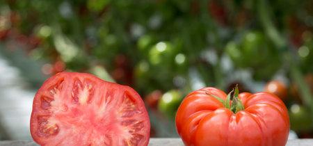 ¿Cómo, cuándo y por qué los tomates volverán a saber a tomate?