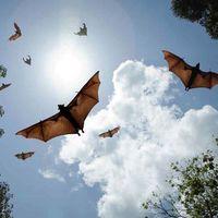 México quiere tener su propio santuario de murciélagos para albergar hasta cinco millones de estas criaturas