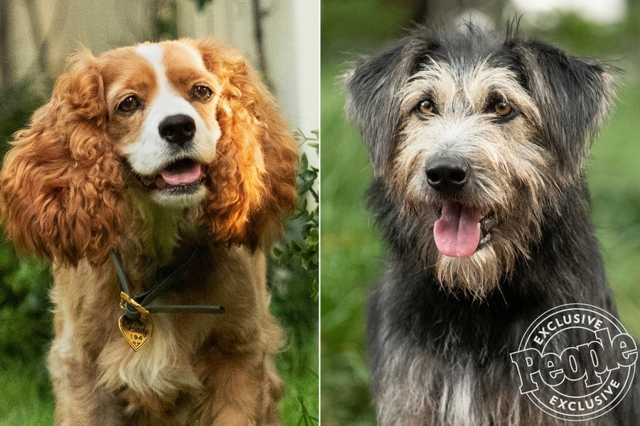 First images of 'The lady and the tramp': so, are the stars of the remake in real image to Disney+