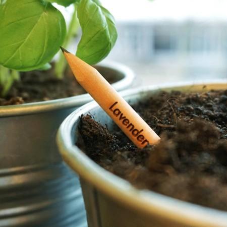 Con estos lápices harás crecer tus ideas... literalmente