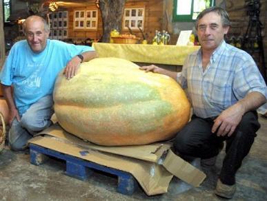 Una calabaza de 217,5 kilos de peso fruto del esfuerzo de dos agricultores catalanes