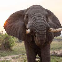 El misterio de los 350 elefantes muertos en Botsuana empieza a esclarecerse: una vez descartado todo, toca volver a lo más básico, al agua
