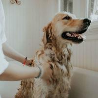 ¿Tener perro mejora tu salud? La expectativa vital de sus dueños es un 24% superior a las del resto