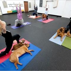 Foto 1 de 5 de la galería yoga-con-tu-mascota en Trendencias