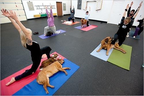 Foto de Yoga con tu mascota (1/5)