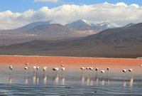 La Laguna Colorada de Uyuni (Bolivia)