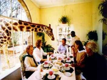 Desayuno con jirafas en Giraffe Manor