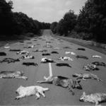 ¿Qué hacen todos estos perros muertos en el circuito de Magny-Cours?