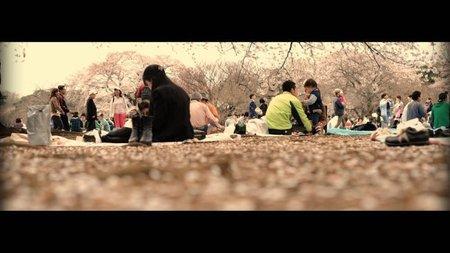 Los mejores días para contemplar los cerezos en flor en Japón