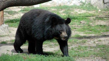 Si tu conexión a Internet va lenta, échale la culpa a los osos