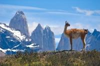 Se reabre al público el Parque Nacional Torres del Paine en Chile