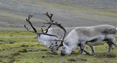 Svalbard: El lugar más al norte del mundo habitado