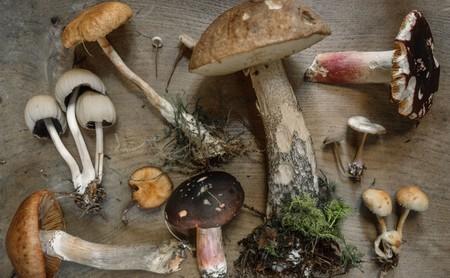 Setas: propiedades, beneficios y su uso en la cocina