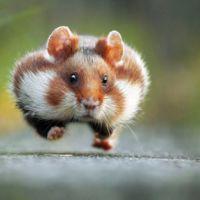 Estas son las fotos de animales más divertidas del año