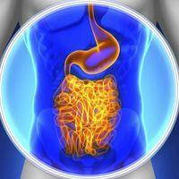 Dieta FODMAPs: ¿realmente vale la pena que la pongas en práctica?