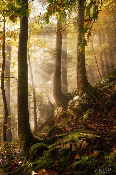 Martin Podt Forest 2