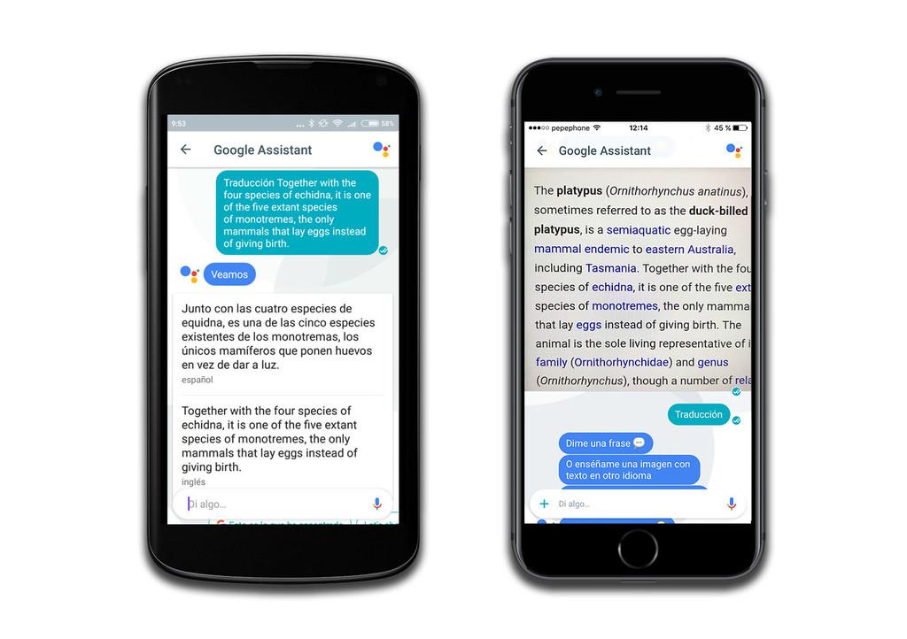 Google Assistant, traducción