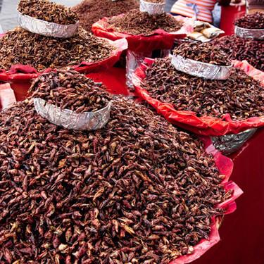 Insectos comestibles: parte fundamental de la dieta prehispánica