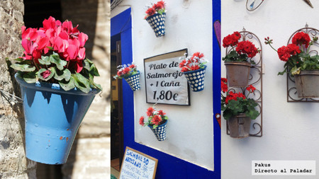 Flores en Córdoba