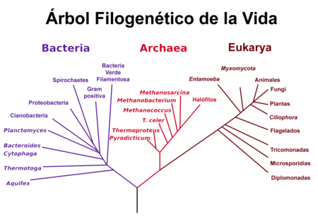 Phylogenetic Tree Es