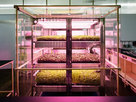 Ikea trabaja en abrir una cadena de fast food y en cambiar el futuro de la alimentación (sin acabar comiendo insectos)