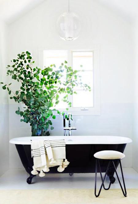 Minimal Plantas 3