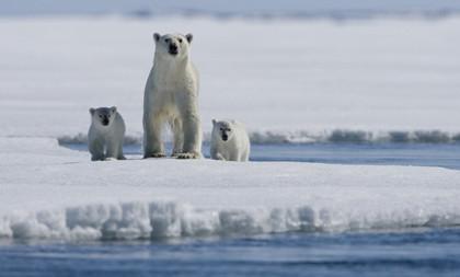 'Los reyes del ártico': el calentamiento global sin adoctrinar