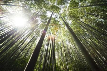 Cosmética ecológica, qué es y cómo distinguirla