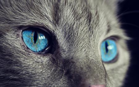 Escucha música compuesta específicamente para gatos y comprueba su efecto calmante