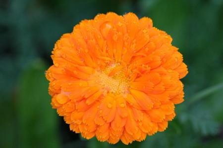 Flor8
