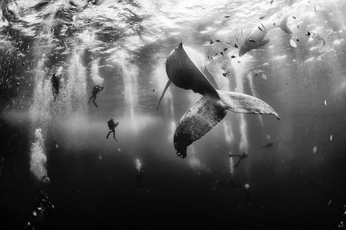 Una increíble foto de humanos nadando con ballenas y otros ganadores del National Geographic Traveler Photo Contest
