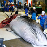 El mundo ya no tiene hambre de ballenas. Así que Islandia ha dejado de cazarlas por primera vez