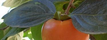 El caqui, fruta otoñal rica en antioxidantes