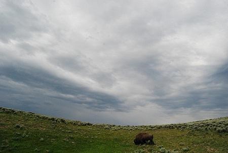 La resistencia de las praderas frente al Cambio Climático