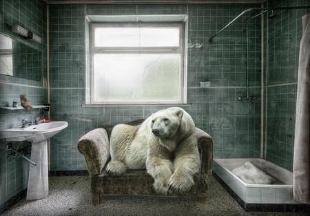 Marcel Van Balken Polarbearpet