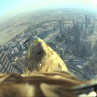 El águila Darshan no tiene límites: así se ve su vuelo desde el edificio más alto del mundo