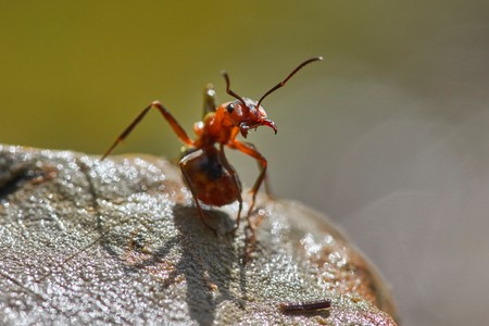 La picadura de insecto más dolorosa del mundo es de una hormiga y con este vídeo podemos hacernos una idea de por qué