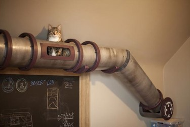 Un túnel para el gato le da a tu casa un toque industrial