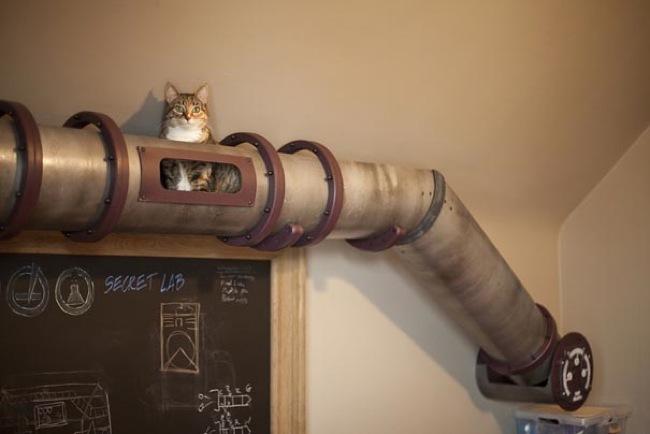 tunel cat