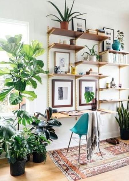 Plantas Fresca