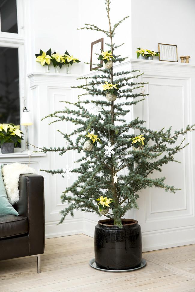 2016 Poinsettia Diy Adorno Arbol Navidad 07 Es