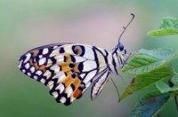 El efecto mariposa: el HP Slate con Windows 7 podría haber caído también