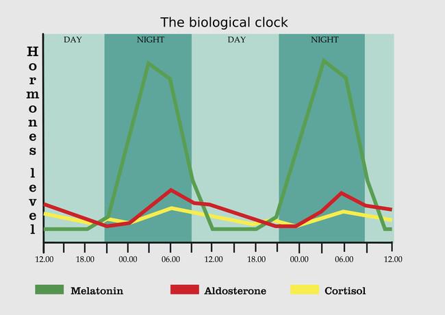 Reloj Biologico Y Niveles Hormonales