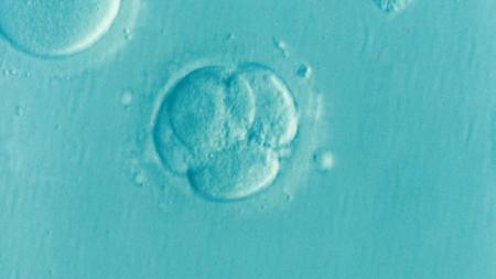 embriones-congelados