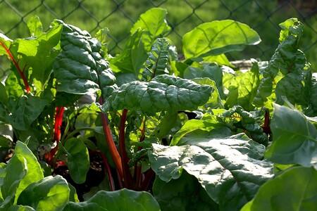 Verduras De Temporada En Mexico Que Puedes Disfrutar En Octubre Acelgas