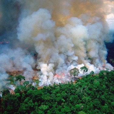 Cara Delevingne, Úrsula Corberó y Camila Cabello, entre otras celebridades, denuncian la gravedad de los incendios en el Amazonas